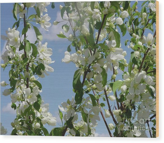 White Crabapple Wood Print