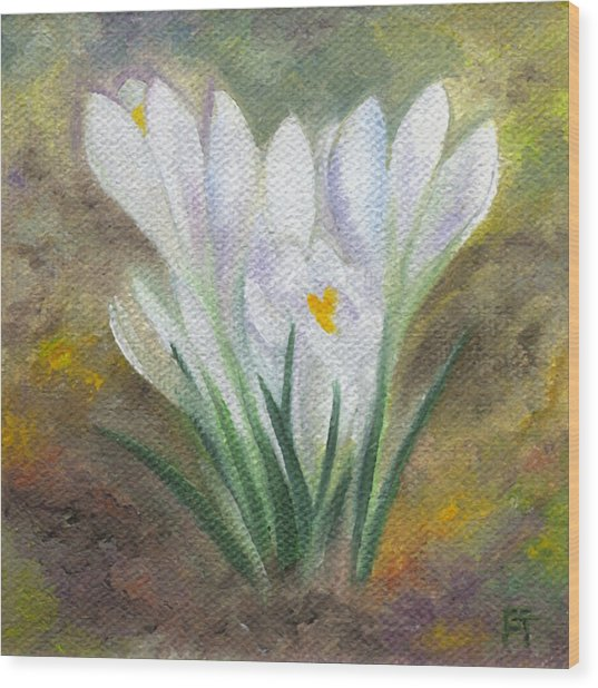 White Crocus Wood Print