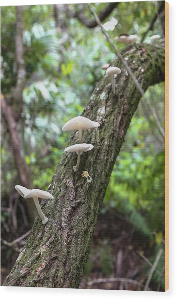 White Deer Mushrooms Wood Print