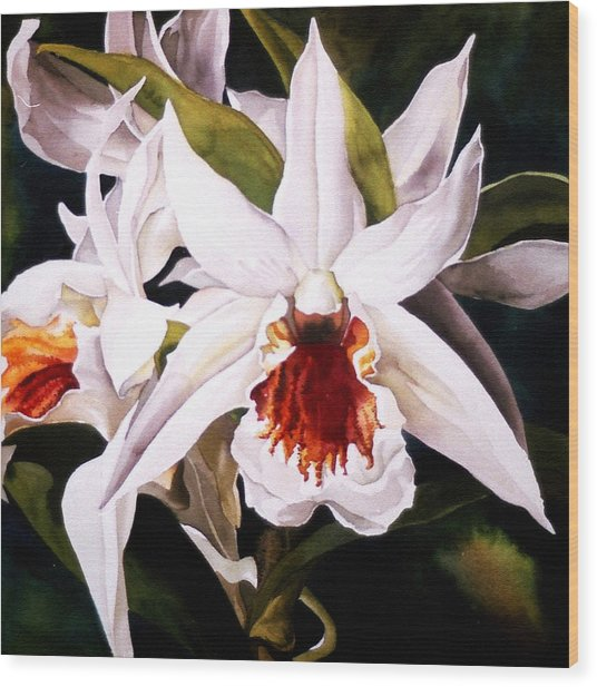 White Dendrobium Orchid Wood Print