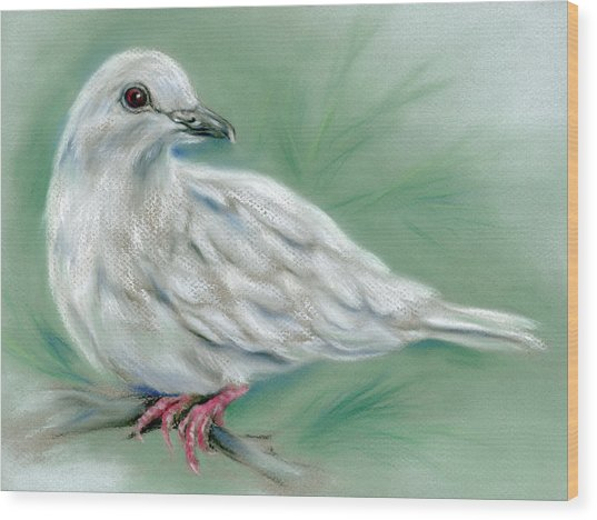 White Dove In The Pine Wood Print