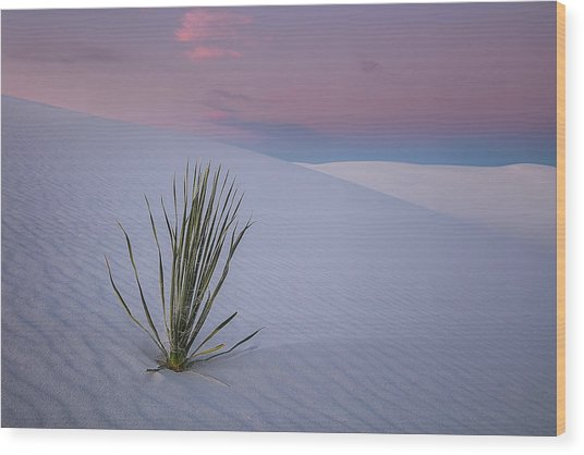 White Dunes Wood Print