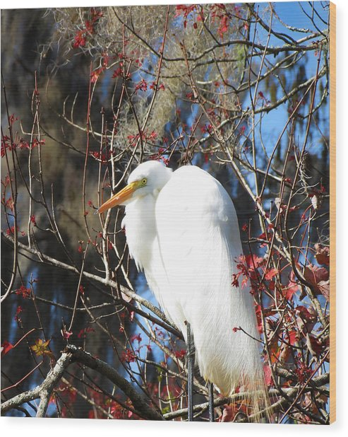 White Egret Bird Wood Print