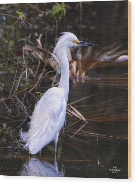 White Egret In Florida Pond Wood Print