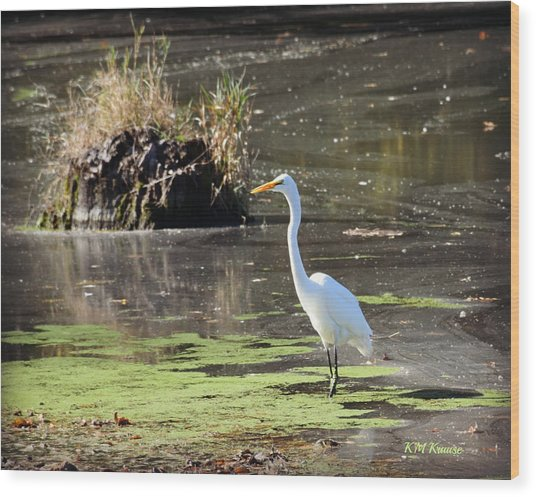 White Egret In The Shallows Wood Print