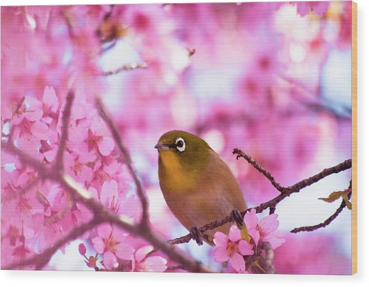 White Eye Bird Wood Print by masahiro Makino