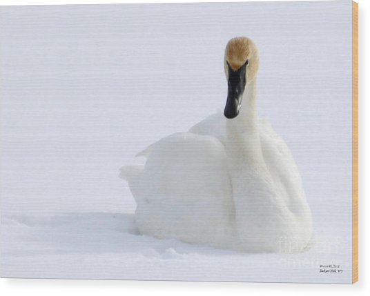 White Feathers On Snow Wood Print