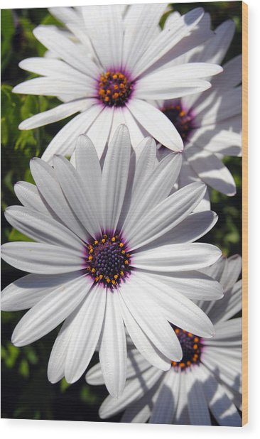 White Flower 1 Wood Print