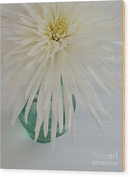 White Flower In A Vase By Jasna Gopic Wood Print