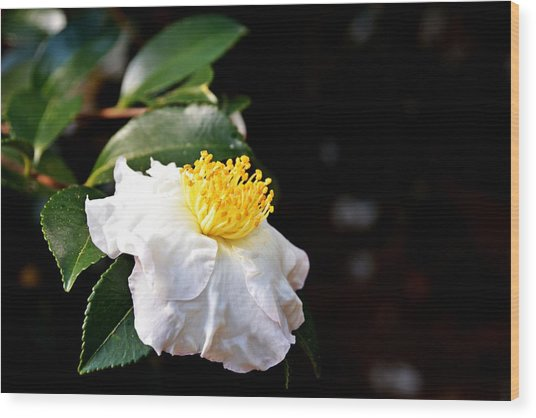 White Flower-so Silky And White Wood Print