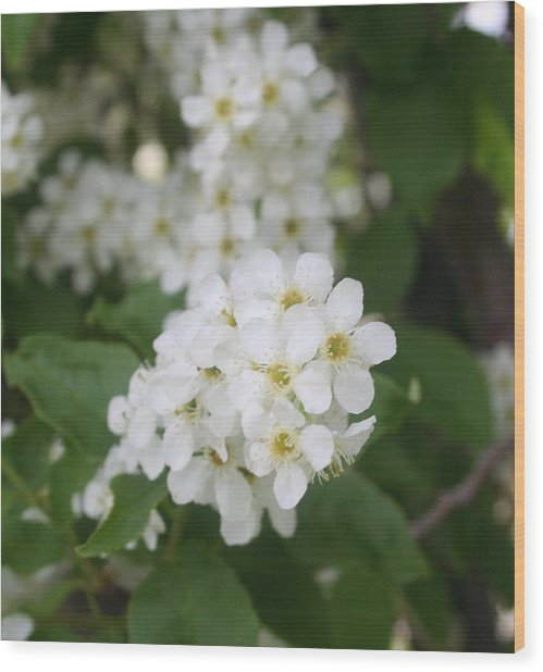 White Flower Wood Print by Susan Pedrini