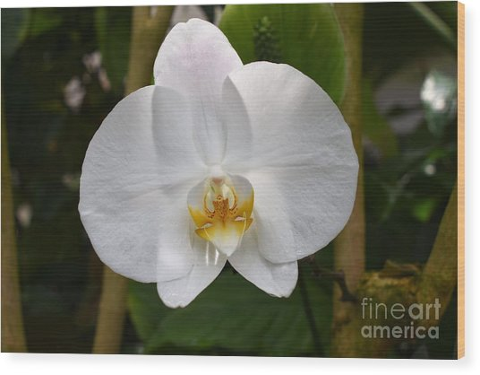 White Flower With Golden Accents Wood Print
