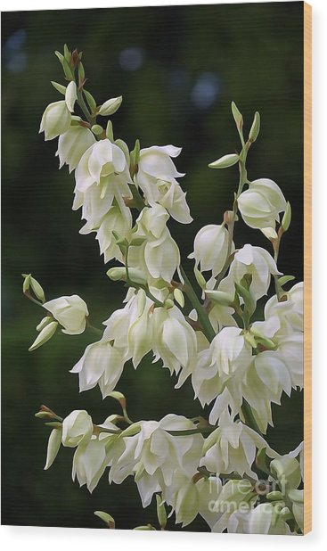 White Flowers Photography Wood Print