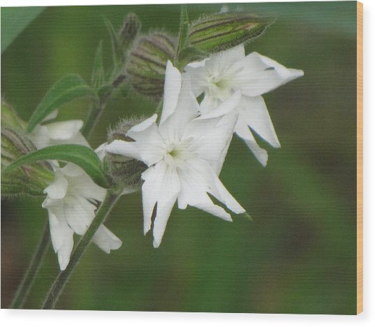 White Flowers Wood Print by Sylvia Wanty