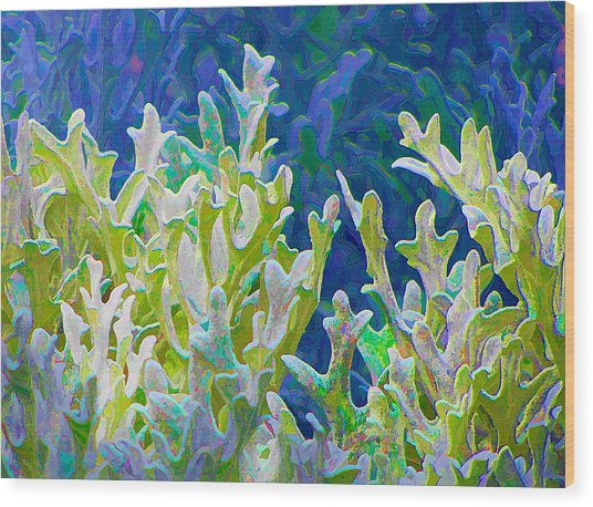 White Forest 6 Wood Print by Michael Taggart II
