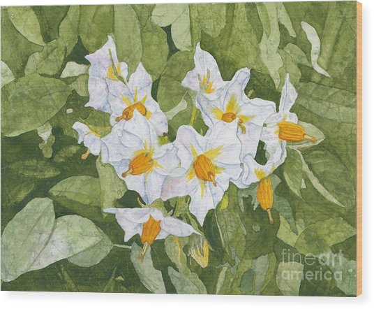White Garden Blossoms Watercolor On Masa Paper Wood Print