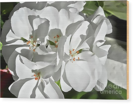 White Geraniums Wood Print
