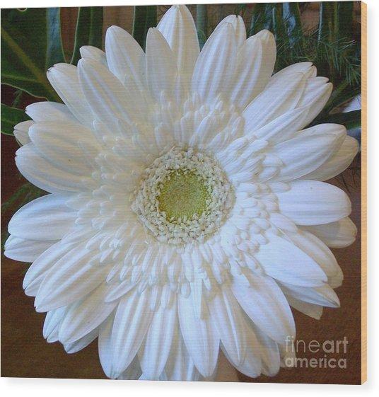 White Gerber Beauty Wood Print by Marsha Heiken