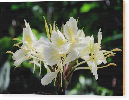 White Hawaiian Flowers Wood Print