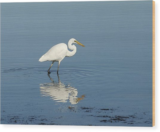 White Heron Reflected Wood Print by Barry Culling