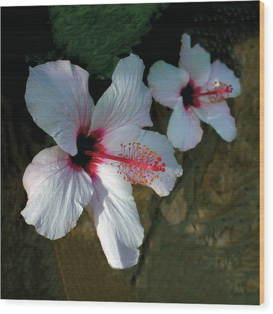 White Hibiscus Pair Wood Print