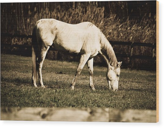 White Horse Wood Print by Martin Rochefort