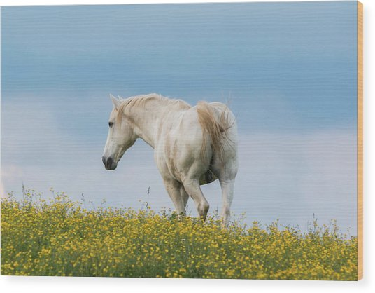 White Horse Of Cataloochee Ranch - May 30 2017 Wood Print