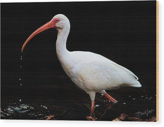 White Ibis Dripping Wood Print