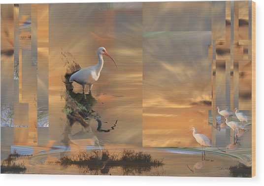 White Ibis In Abstract Wood Print