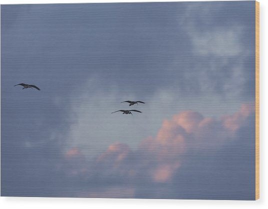 White Ibis In Flight At Sunset Wood Print