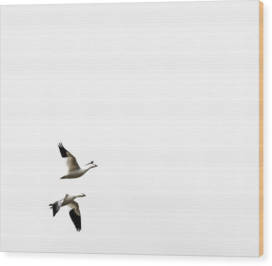 White In Flight Wood Print