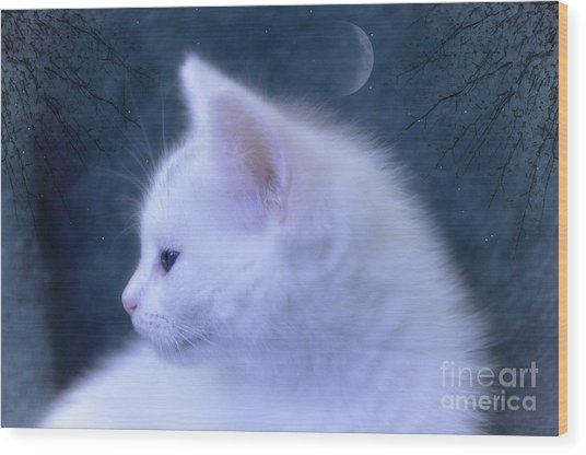White Kitten At Night Wood Print