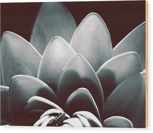 White Lotus At Dawn Wood Print