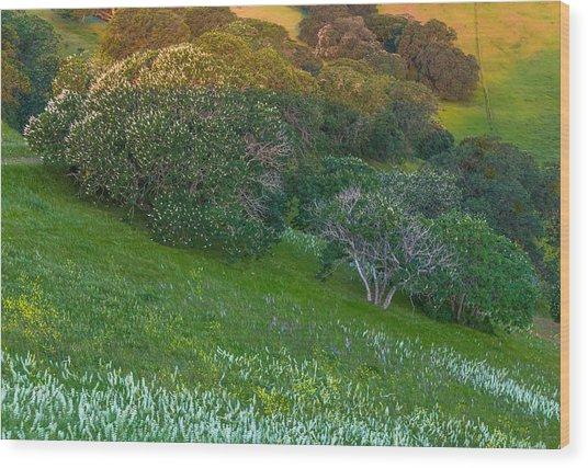 White Lupine And Buckeye Wood Print