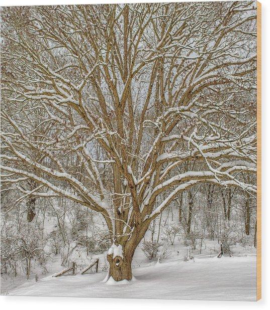 White Oak In Snow Wood Print