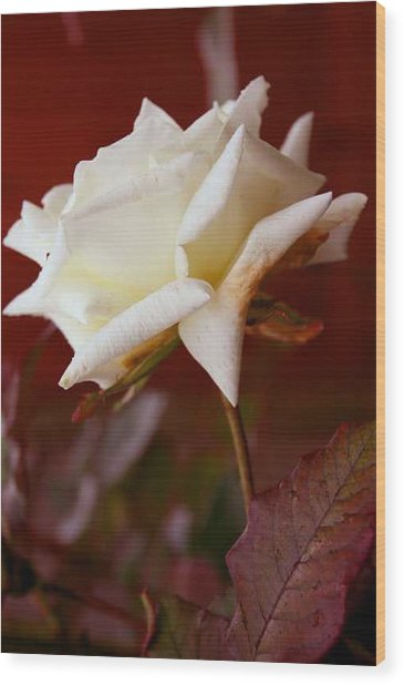 White Wood Print by Ofelia  Arreola