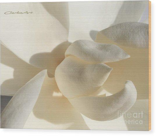 White-on-white Magnoia Wood Print