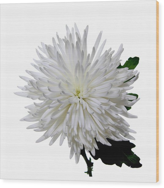 White On White Wood Print by Peter Dorrell