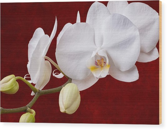 White Orchid Closeup Wood Print