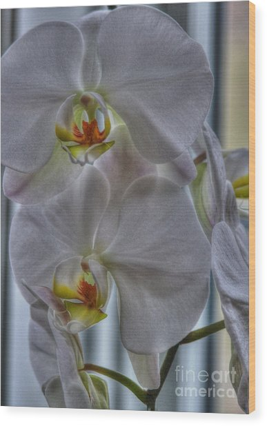 White Orchids Wood Print by David Bearden