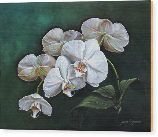 White Orchids Wood Print