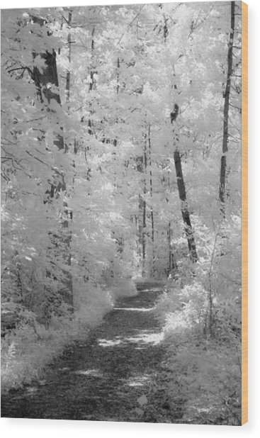White Path Wood Print