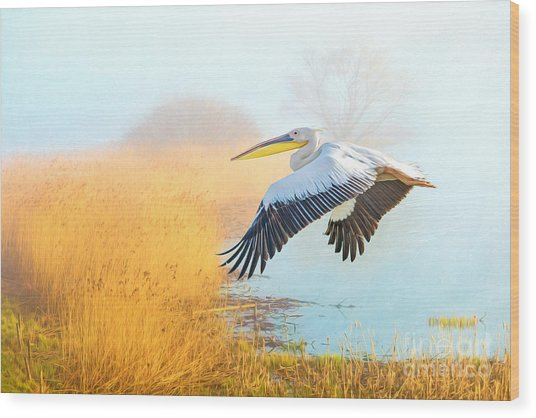 White Pelican At The Golden Isles Wood Print