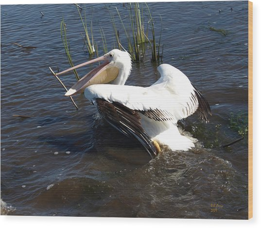 White Pelican In The Marsh Wood Print by Bill Perry