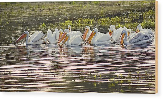 White Pelican Parade Wood Print
