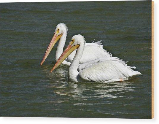 White Pelicans Wood Print by Rodney Cammauf