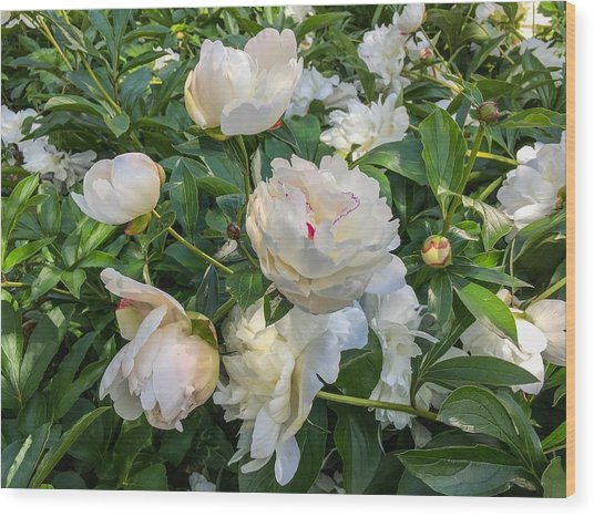White Peonies In North Carolina Wood Print