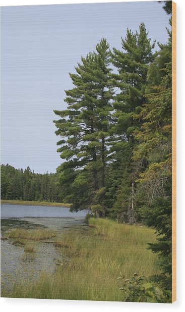 White Pines Wood Print by Alan Rutherford