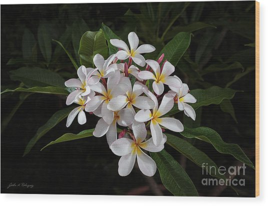 White Plumerias In Bloom Wood Print