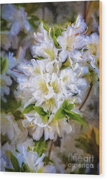 White Rhododendron Wood Print